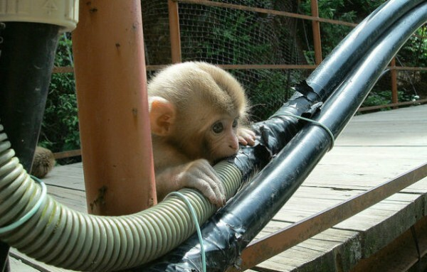 macaco fibra